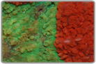 Ultra Colored Red and Green Aussie Folded Brain Coral