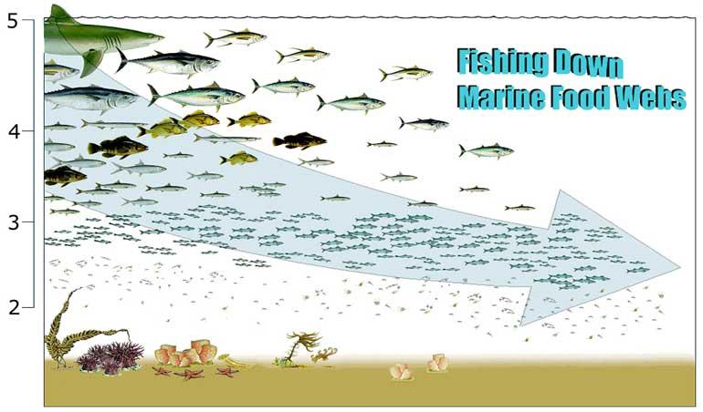 Suocosmeham Marine Food Chain Examples