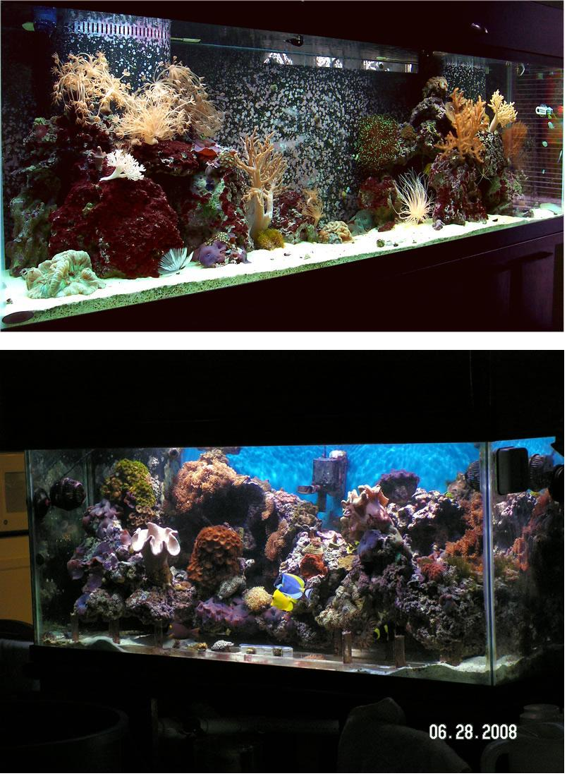The two tanks profiled in this article are (from top to bottom) Jeff Nicholsu0027 125 gallon soft coral system and Michael Wolfu0027s 75 gallon soft coral dominated ... & Two Soft Coral Tanks Profiled azcodes.com