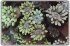 Green Flower Pot Coral