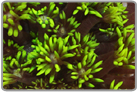 Metallic Green Flower Pot Coral