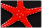 White Spot Red Fromia Star